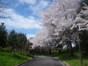 Sakura0410